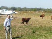 uno-de-los-pilotos-muestra-la-cantidad-de-vacas-sobre-la-pista-_767_573_1395641