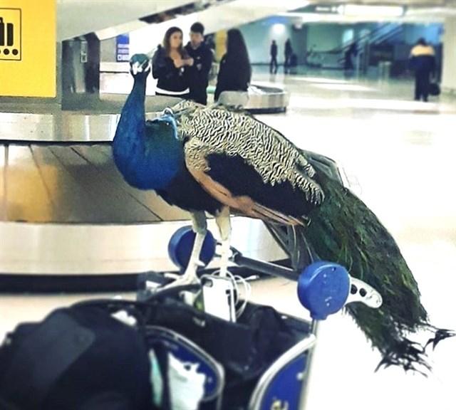 Pavo Airport