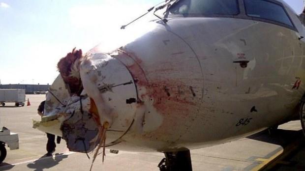 160908153604-bird-strikes-plane-nose-cone-full-169