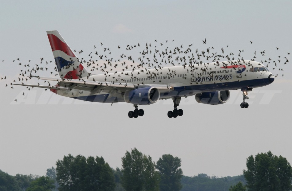 Bird-Strike
