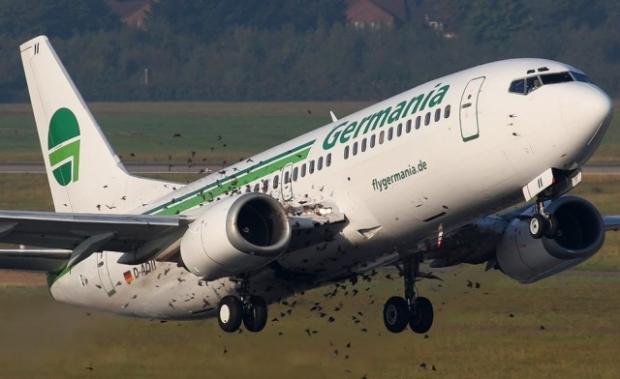 avión-estorninos-boeing-pajaros